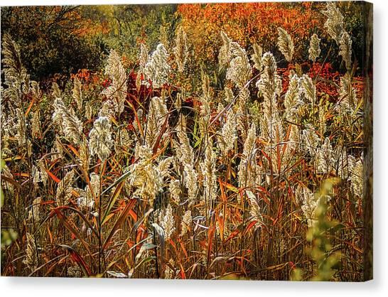 Changing Season Canvas Print