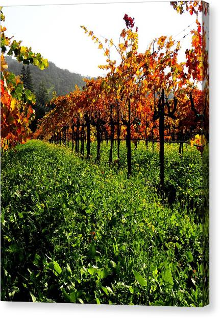 Changing Vines Canvas Print