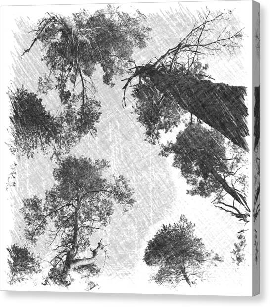 Charcoal Trees Canvas Print
