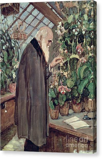 Greenhouse Canvas Print - Charles Robert Darwin by John Collier