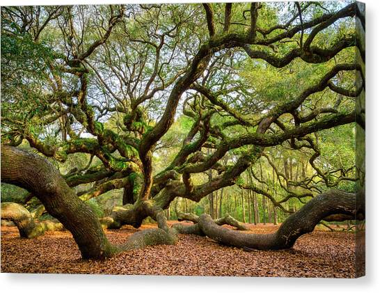 Charleston Sc Angel Oak Tree South Carolina Landscape Canvas Print