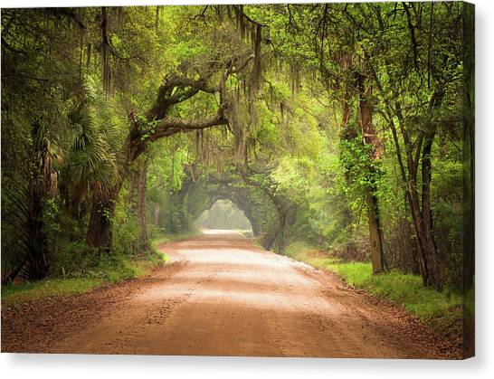 Forest Paths Canvas Print - Charleston Sc Edisto Island Dirt Road - The Deep South by Dave Allen