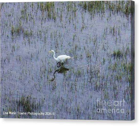 Canvas Print - Charleston Wildlife 1 by Lisa Marie Towne