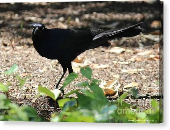 Canvas Print - Charleston Wildlife. Black Bird by Lisa Marie Towne