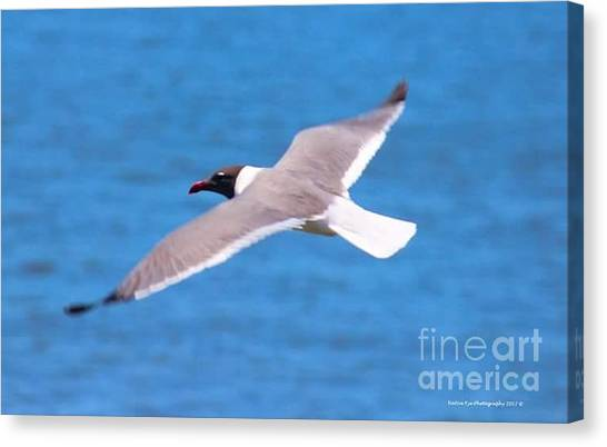 Canvas Print - Charleston Wildlife. Seagull by Lisa Marie Towne