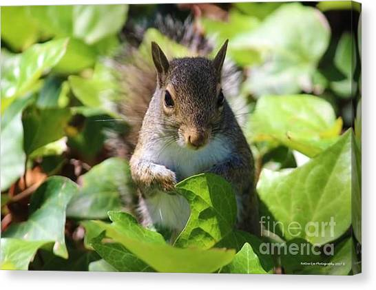 Canvas Print - Charleston Wildlife. Squirrel by Lisa Marie Towne