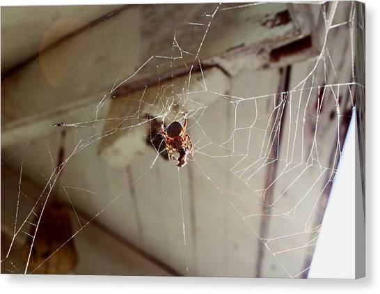 Spider Web Canvas Print - Charlotte's Web  by Julie Kniess