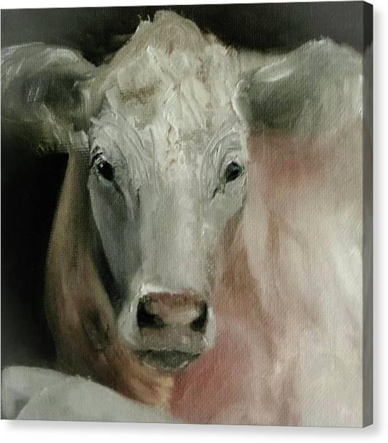 Charolais Cow Painting Canvas Print