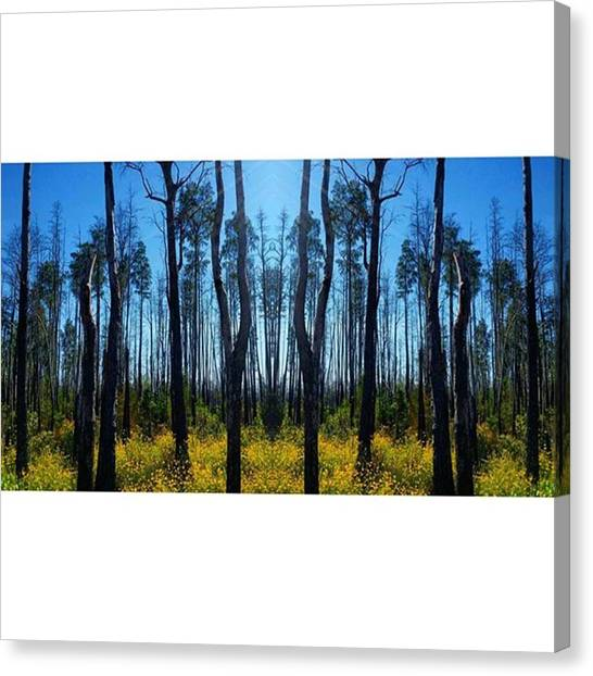 Okefenokee Canvas Print - Charred Forest From The Fire Of 2011 by Karen Breeze