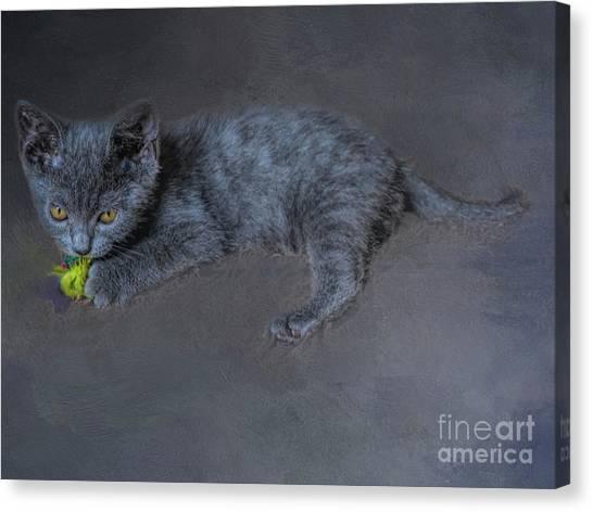 Chartreuxes Canvas Print - Chartreux Kitten by Elisabeth Lucas