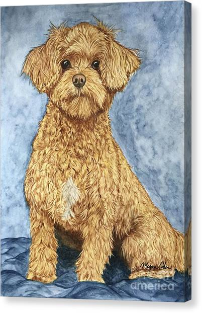 Canvas Print - Chase The Maltipoo by Megan Cohen