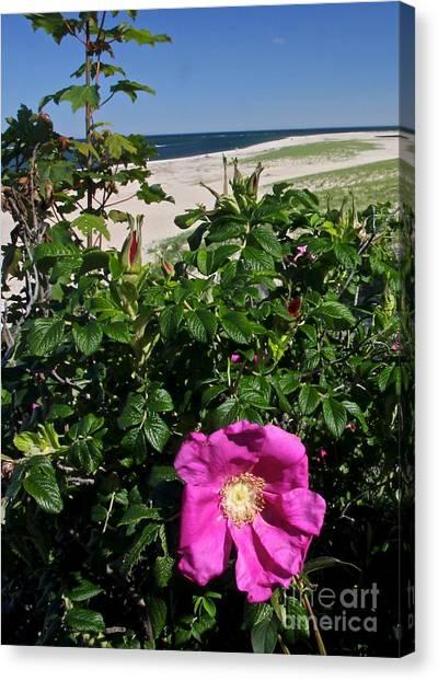 Chatham Flower Canvas Print