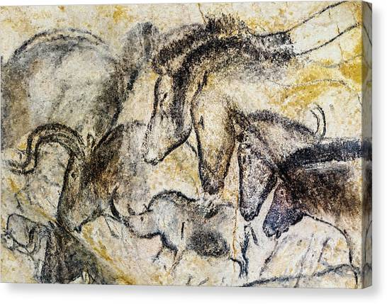 Chauvet Horses Aurochs And Rhinoceros Canvas Print