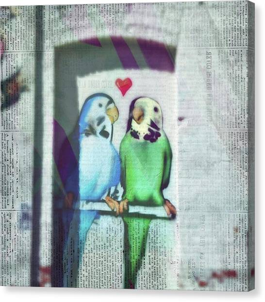 Lovebirds Canvas Print - Check Out The Writing Above The Blue by Ginger Oppenheimer