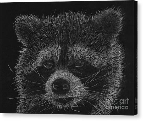 Cheeky Little Guy - Racoon Pastel Drawing Canvas Print