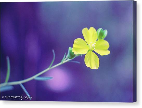 Cheer Up Buttercup Canvas Print