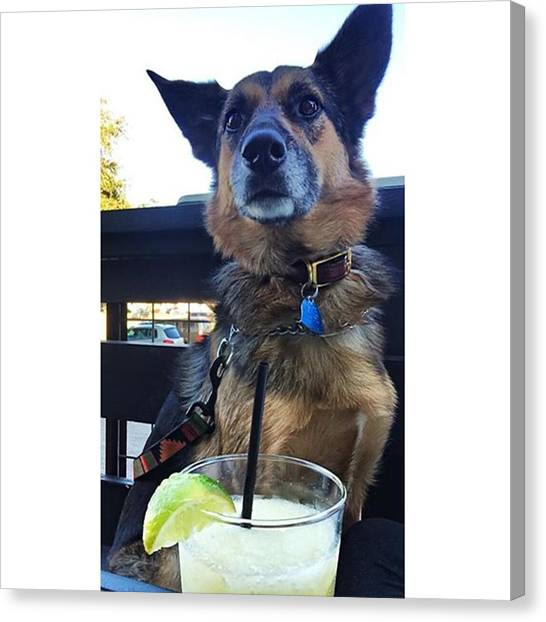 German Shepherds Canvas Print - Cheers To 2016 by Stevy Olive