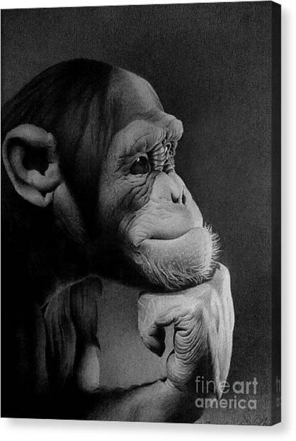 Chimpanzees Canvas Print - The Thinker by Miro Gradinscak