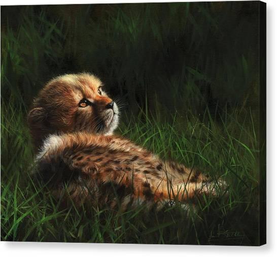 Cheetahs Canvas Print - Cheetah Cub In Grass by David Stribbling
