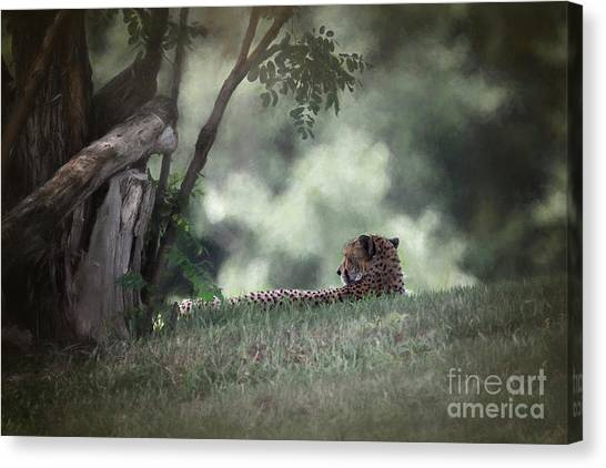 Cheetah On Watch Canvas Print