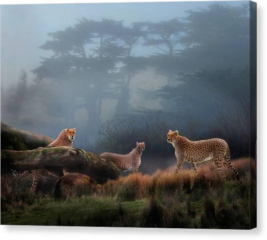 Cheetahs In The Mist Canvas Print