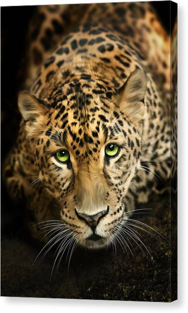 Charities Canvas Print - Cheetaro by Big Cat Rescue