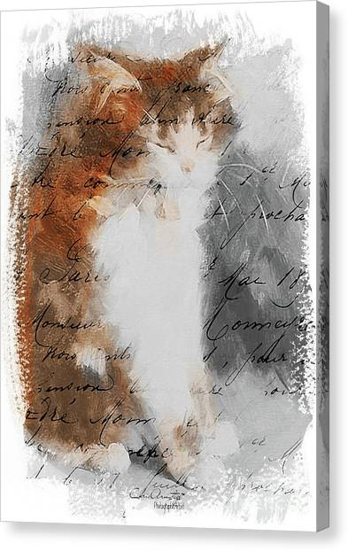Cher Chat ... Canvas Print