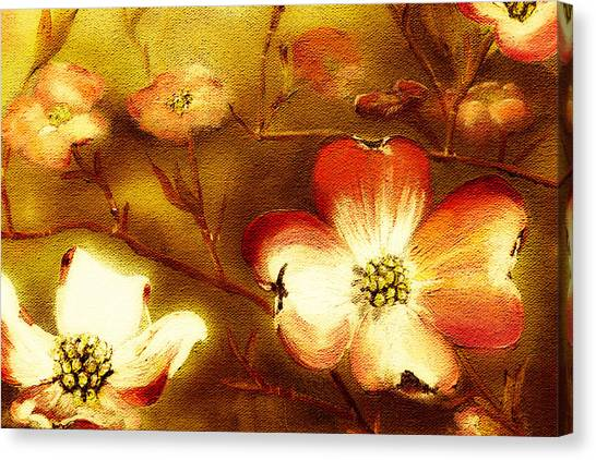 Cherokee Rose Dogwood - Glow Canvas Print