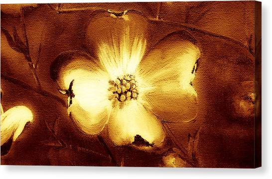 Cherokee Rose Dogwood - Single Glow Canvas Print