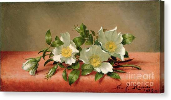 1916 Canvas Print - Cherokee Roses by Martin Johnson Heade