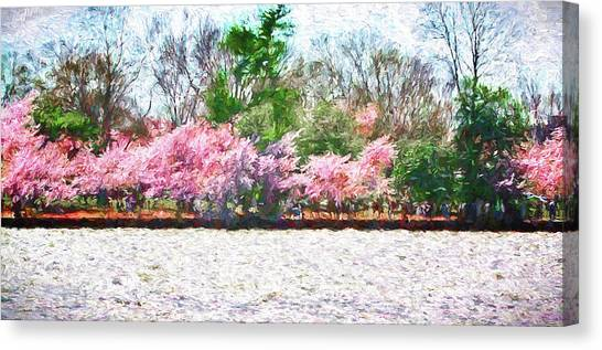 Cherry Blossom Day Canvas Print