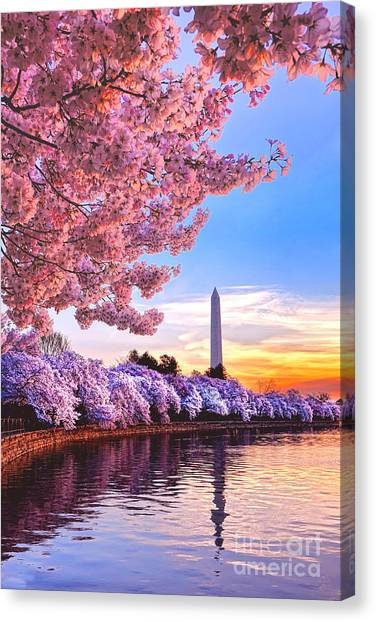 Washington Monument Canvas Print - Cherry Blossom Festival  by Olivier Le Queinec