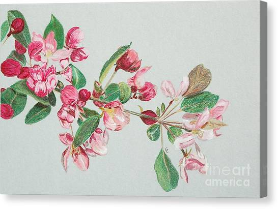 Cherry Blossom Canvas Print by Glenda Zuckerman
