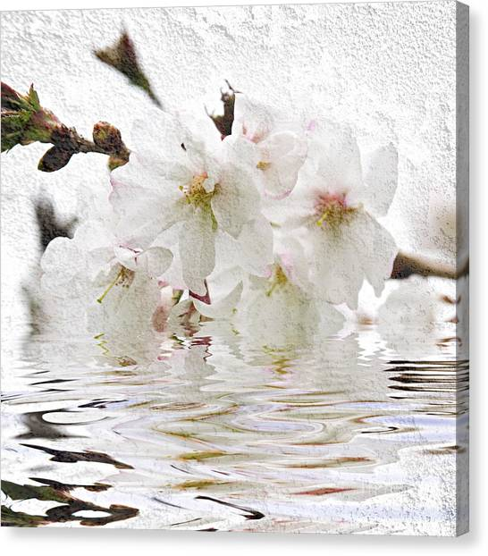 Fruit Trees Canvas Print - Cherry Blossom In Water by Elena Elisseeva