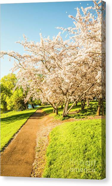 In Bloom Canvas Print - Cherry Blossom Lane by Jorgo Photography - Wall Art Gallery