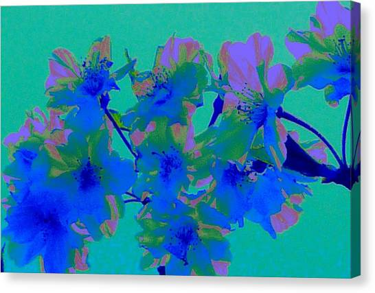 Cherry Blossom Series 2 Canvas Print by Jen White