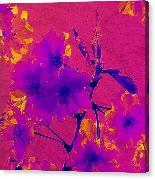 Cherry Blossom Series 3 Canvas Print by Jen White