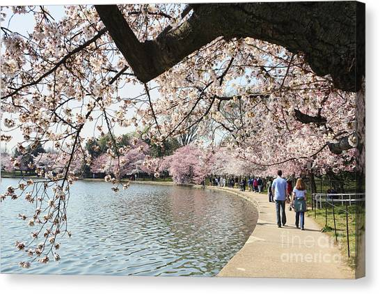 Cherry Blossom Stroll Around The Tidal Basin Canvas Print