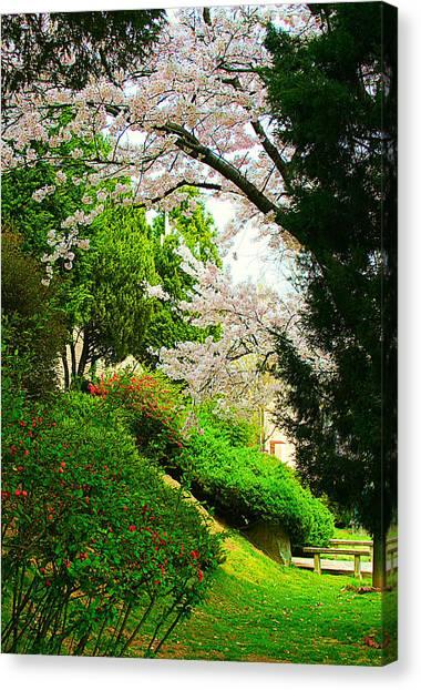 Cherry Blossom Time Canvas Print by Michael C Crane