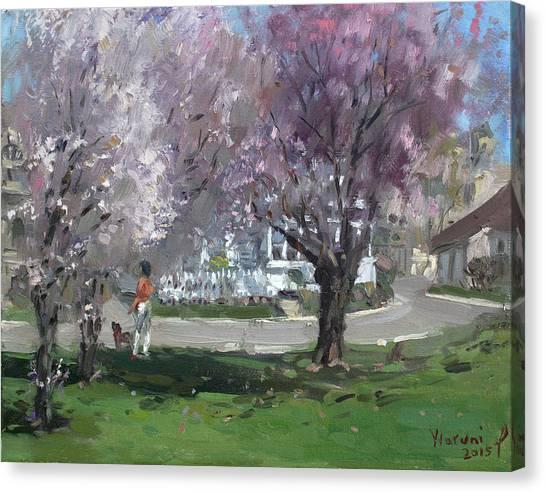 Cherry Blossoms Canvas Print - Cherry Blossom by Ylli Haruni