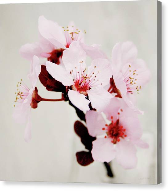 Cherries Canvas Print - Cherry Blossoms 1- Art By Linda Woods by Linda Woods