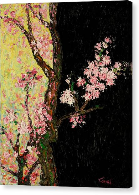Cherry Blossoms 3 Canvas Print by Timothy Clayton