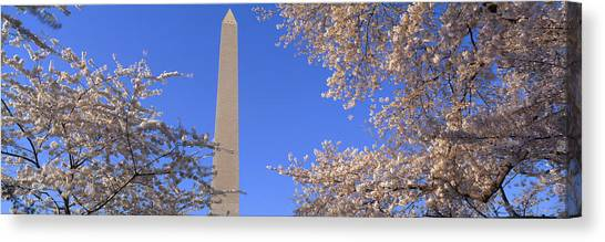 Democratic Canvas Print - Cherry Blossoms And Washington by Panoramic Images