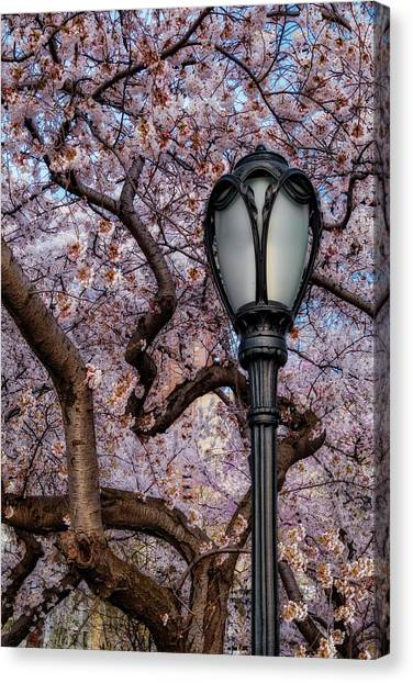 Canvas Print featuring the photograph Cherry Blossoms At Central Park Nyc by Susan Candelario