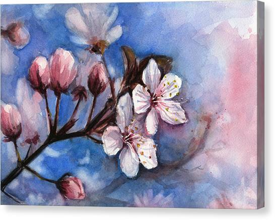 Cherry Blossoms Canvas Print - Cherry Blossoms  by Olga Shvartsur