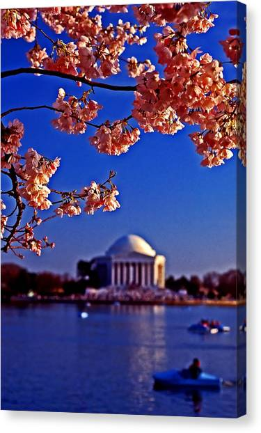 Cherry Blossoms On The Tidal Basin Canvas Print