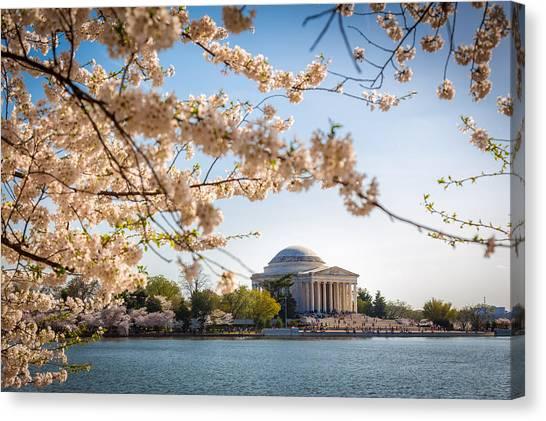 Cherry Blossoms Canvas Print by Robert Davis