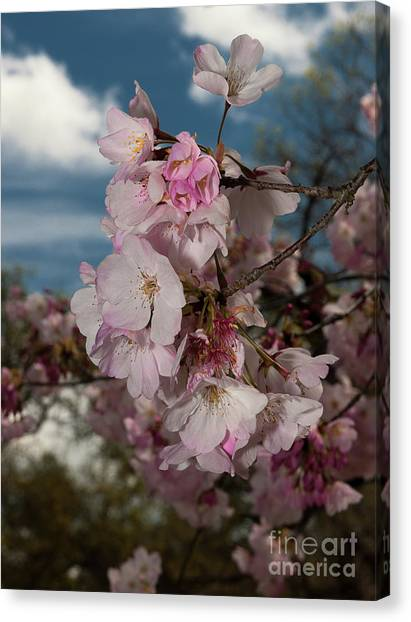 Cherry Blossoms Vertical Canvas Print