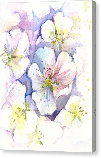 Cherry Blossoms Canvas Print - Cherry Blossoms Watercolor by Olga Shvartsur