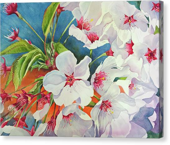 Cherry Blossomsa Canvas Print